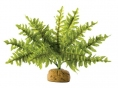 PLANTE EXO TERRA BOSTON FERN S