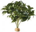 PLANTE EXO TERRA LAUREL BUSH
